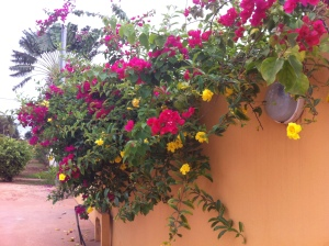 With rainy season comes some beautiful blooms!